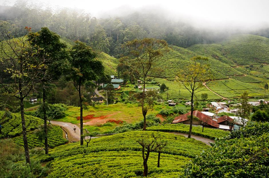 2. Sri Lanka, Nuwara Eliya. Poranne mgły osnuwają wzgórza herbaciane leżące na wysokości 2 tys. metrów npm. (Fot. Ania Błażejewska)