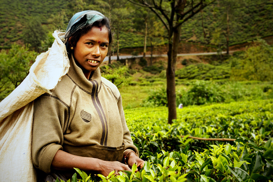 10. Sri Lanka, Nuwara Eliya. Kiedy liście już nie mieszczą się w dłoniach, są wrzucane do umieszczonego na plecach worka. (Fot. Ania Błażejewska)
