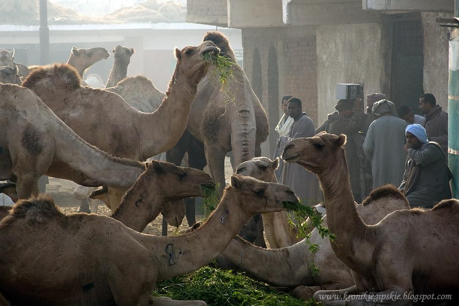 05_Camel_market_Birkasz