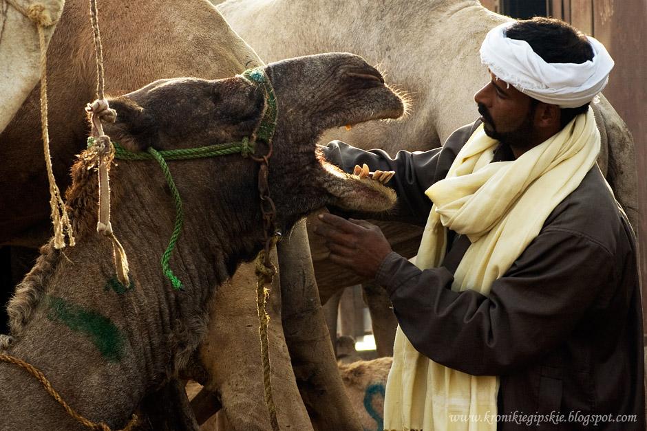 07_Camel_market_Birkasz
