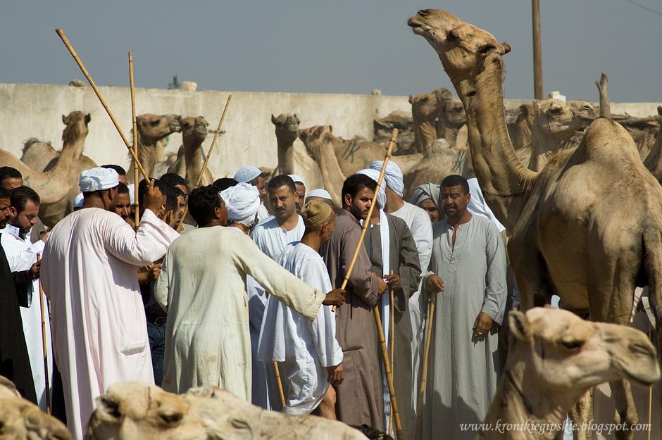 13_Camel_market_Birkasz