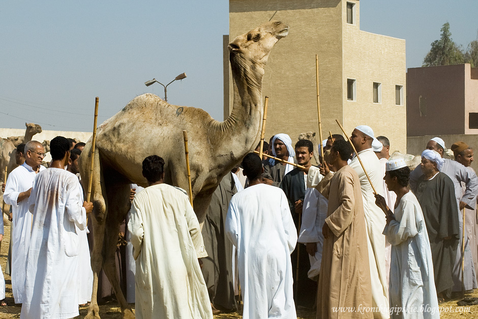 14_Camel_market_Birkasz