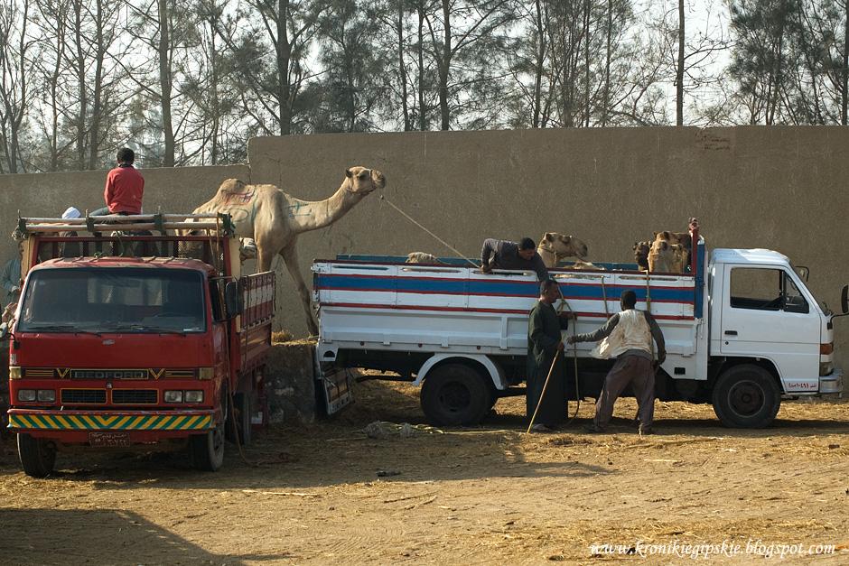16_Camel_market_Birkasz