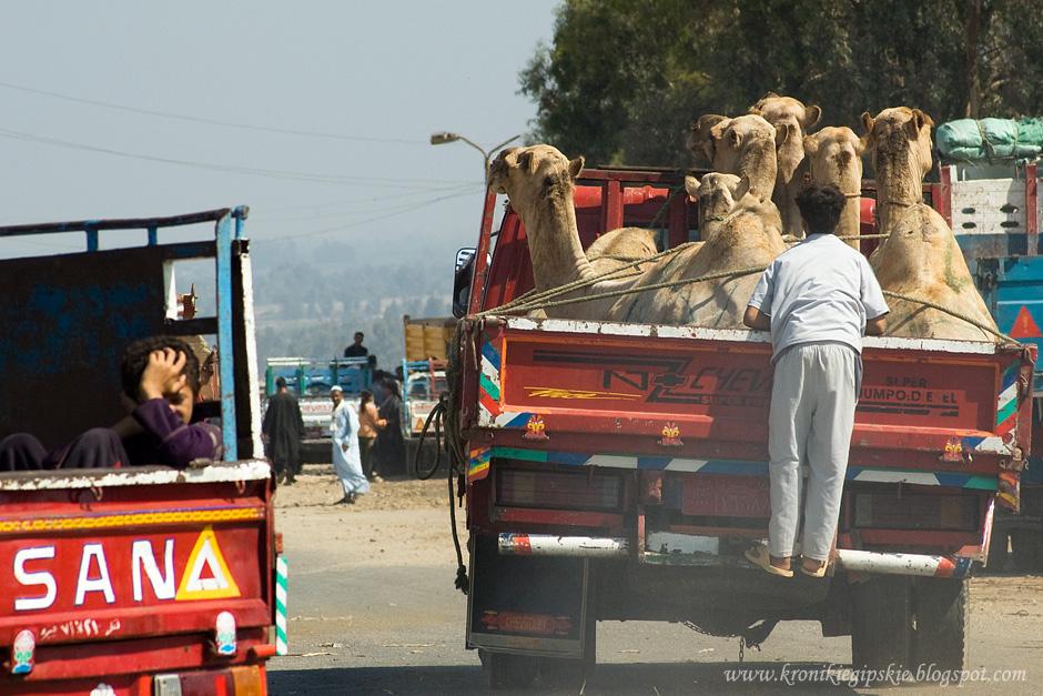 18_Camel_market_Birkasz