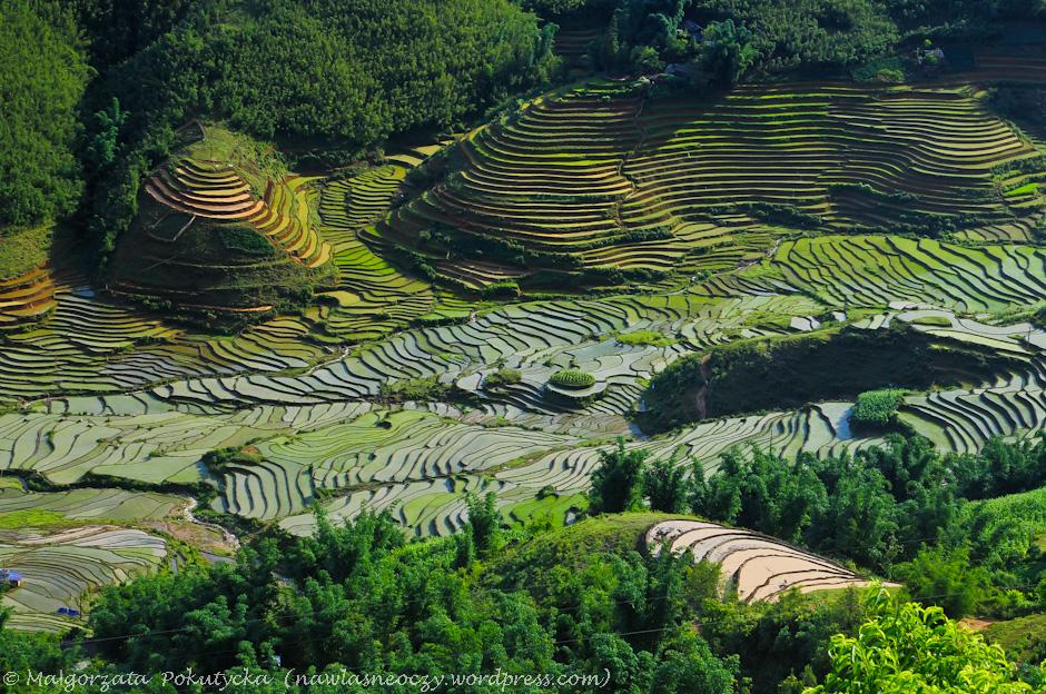 Tarasy ryżowe w Wietnamie