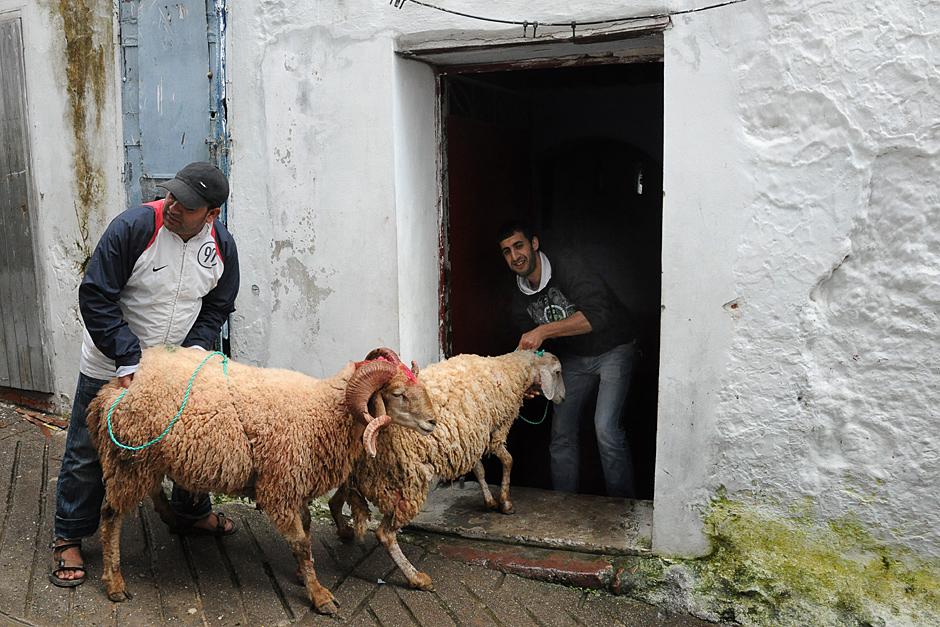 owce w cieście