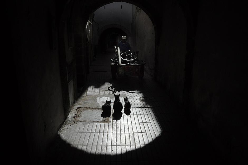 Maroko to kraj kotów