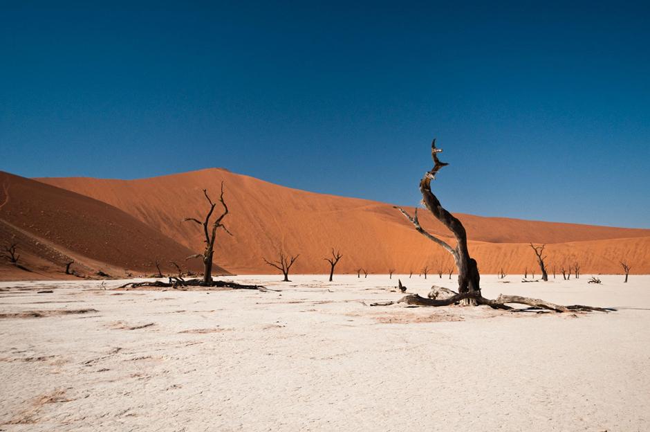 Spalone drzewa na namibijskiej pustyni