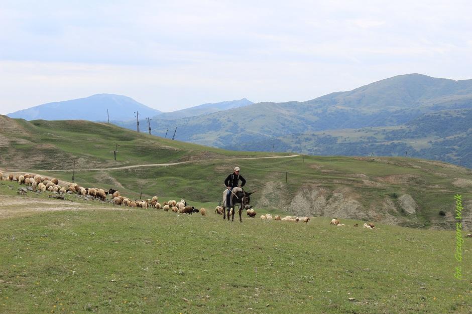 Ormiański pasterz