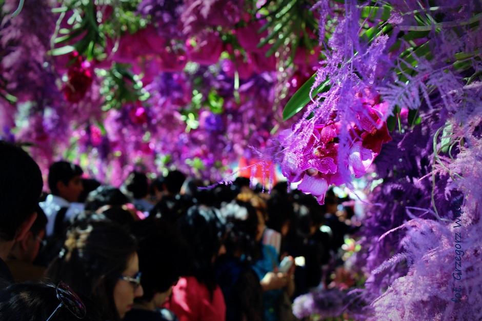 Festiwal kwiatów w Azerbejdżanie - zdjęcia z podróży