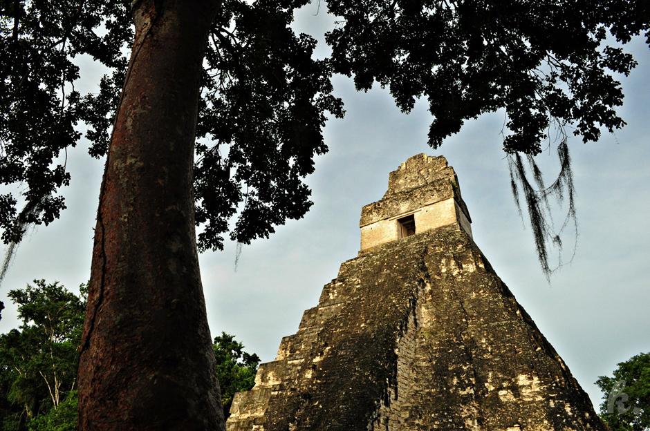 Ruiny Majów w Tikal - zdjęcia z podróży przez Gwatemalę