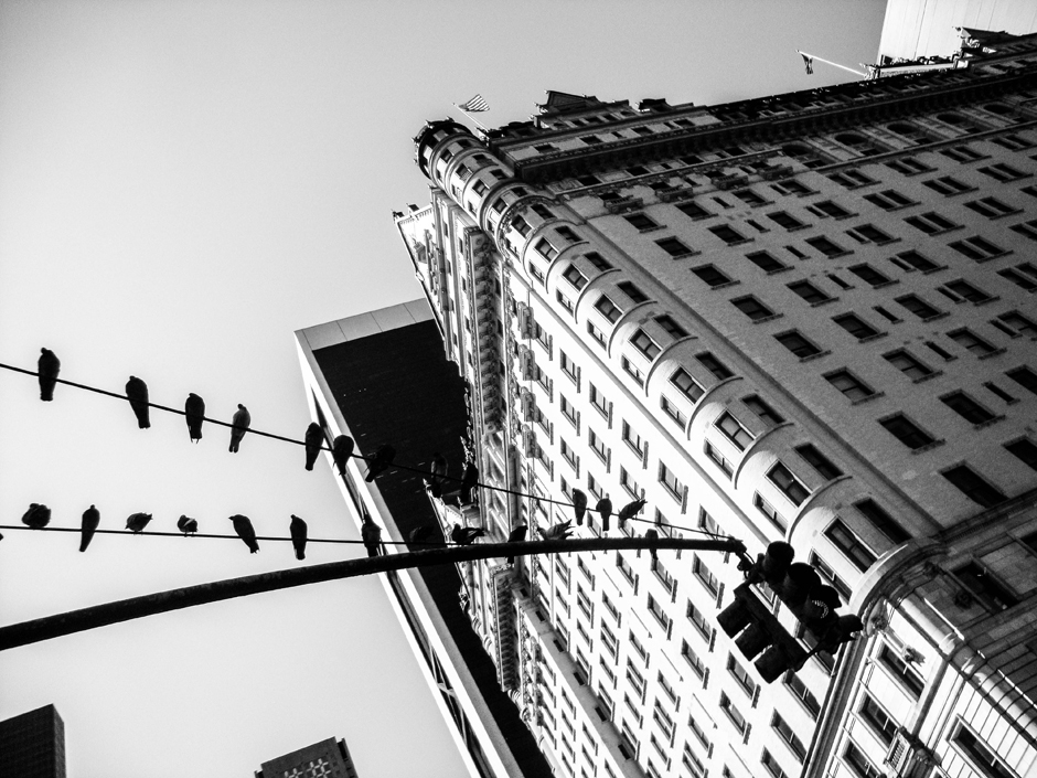 Czarno-biały Nowy Jork, ptaki - foto