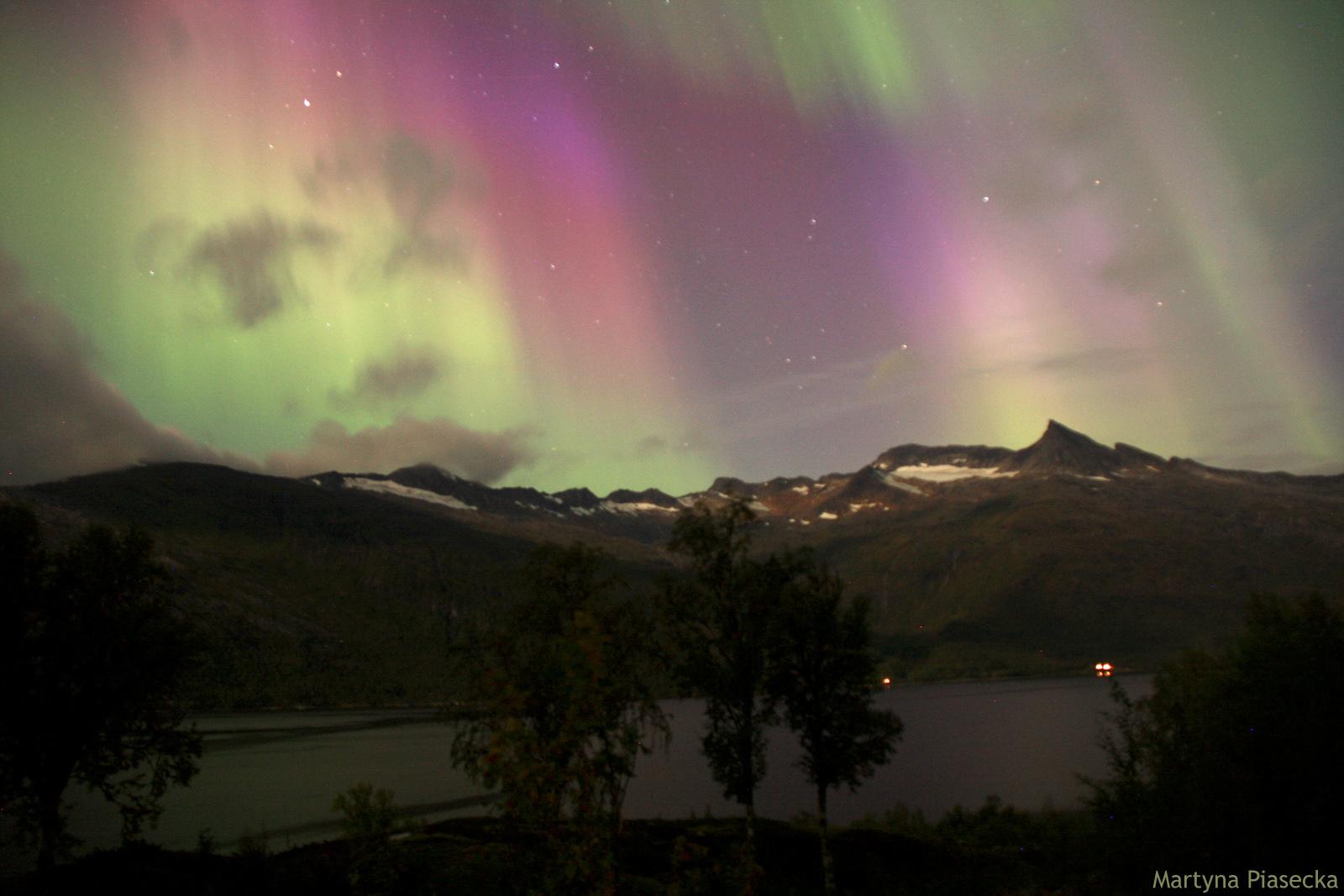 Zorzxa polarna w Norwegii - foto